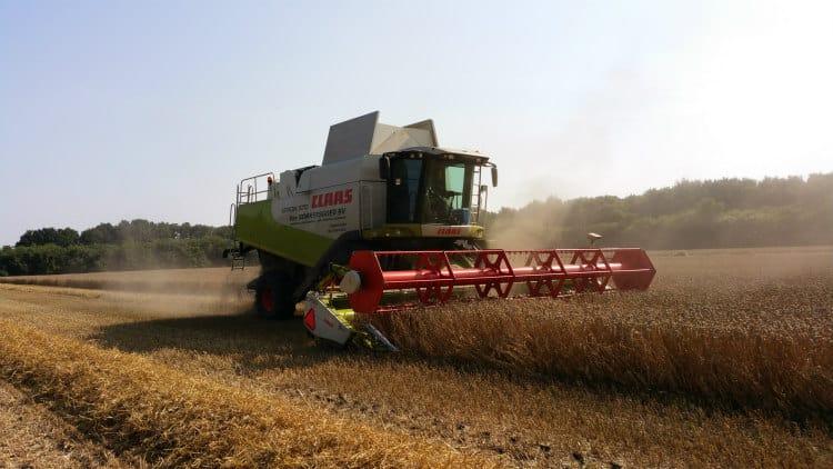 veevoeder tarwe oogst