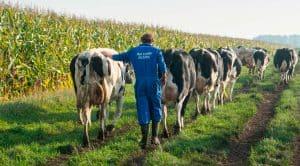 Melkveehouderij Abbink