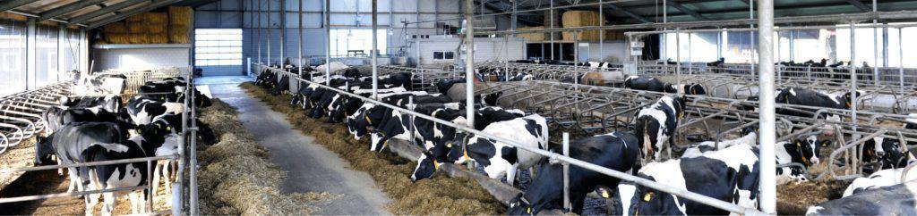 Actief voeders voor melkvee