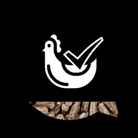 In de pluimveevoeders van ABZ staat de behoefte van de dieren centraal