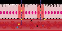 Dynamo biggenvoer gaat darmlekkage bij uw biggen tegen met de juiste additieven