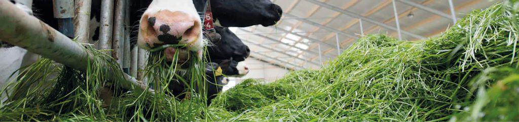 inkuil strategie: behoud van eiwitkwaliteit