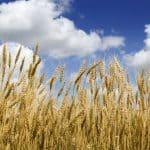 ABZGrondstoffen prijsverwachting grondstoffen veevoer