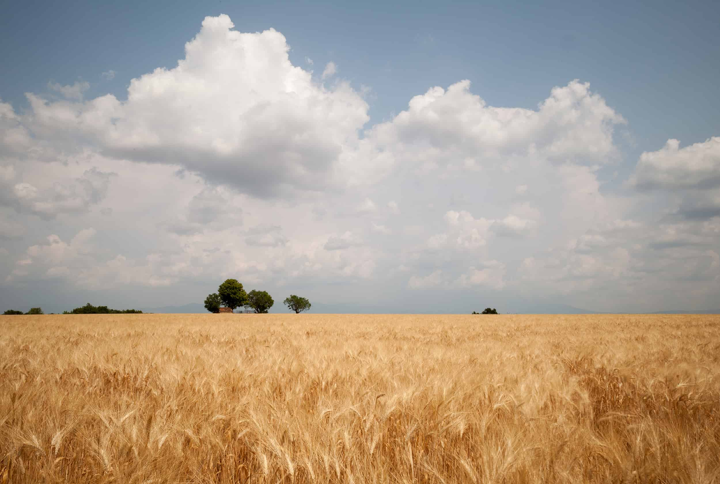 prijsverwachting grondstoffenmarkt ABZ Diervoeding
