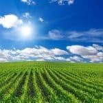 prijsverwachting grondstoffenmarkt ABZ Diervoeding mei 2018