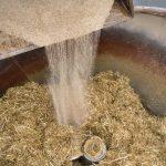 Precies fosfor verstrekken aan de droge koe