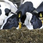 Met hygiene meer melk van uw koeien