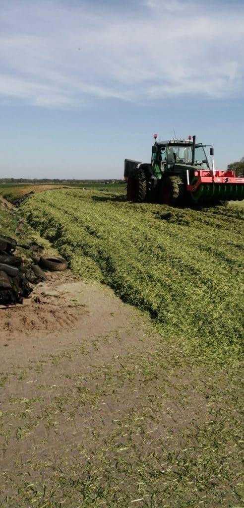 voor extra eiwit van eigen maisland is inzaai met Snelle Lente Rogge oogst een interessante optie