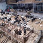 schapenbrok en lammerenbrok 4 mm van ABZ Diervoeding