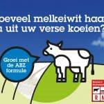 hoeveel melkeiwit haalt u uit uw verse koeien?