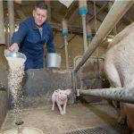 Michel Kusters heeft diergezondheid prima op orde op zijn varkensbedrijf