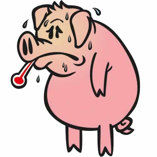 hoe hittestress voorkomen bij mijn varkens