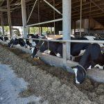 hittestress: beperk de schade voor dier en portemonnee met de preventiemix van ABZ