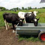 drinkwatervoorziening in de wei voor uw koeien