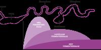 optimale vertering en gunstige fermentatie in de darmen bij biggen