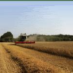 nieuwe oogst granen